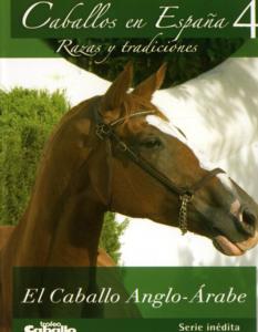 El caballo Anglo-Árabe