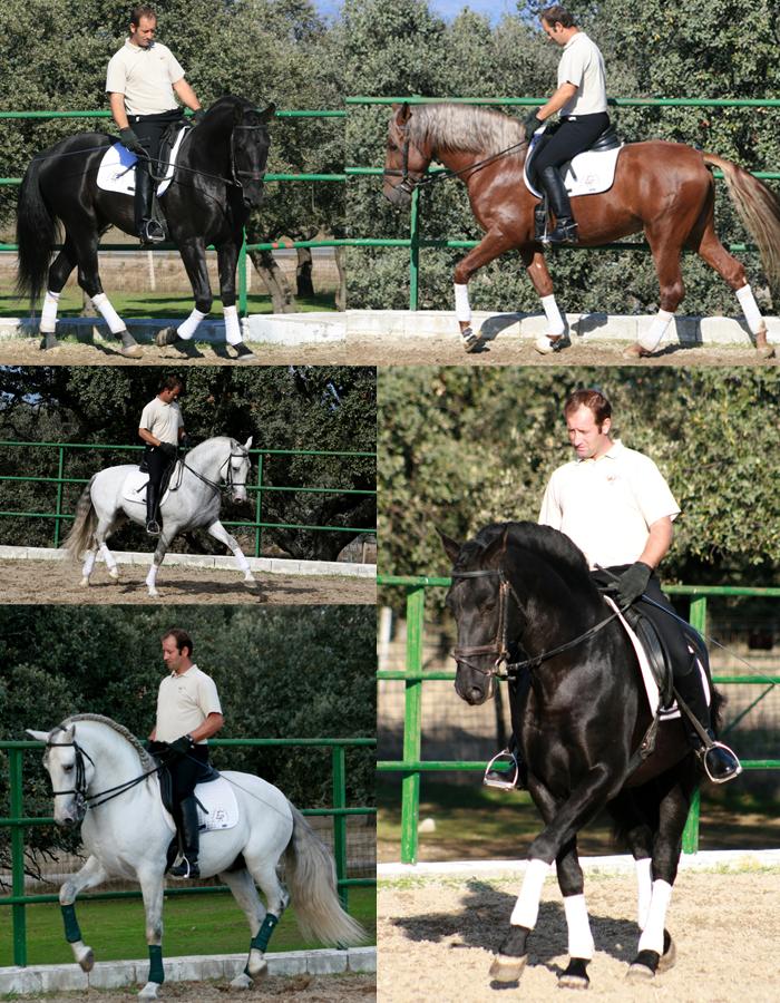 Método Tratado FICE de Equitación Avanzada