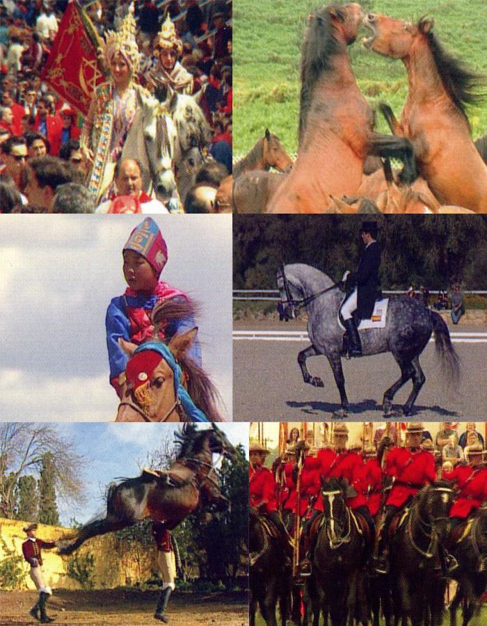 Colección Enciclopedia Mundial del caballo